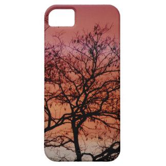 December sunset - covering for iPhone 5 iPhone 5 Cases