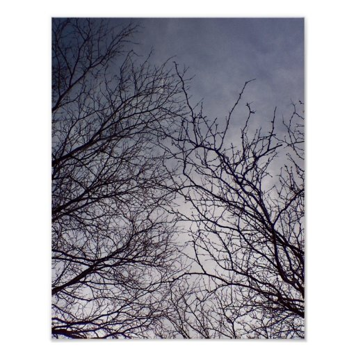 Deciduous tree silhouettes against high cirrus poster