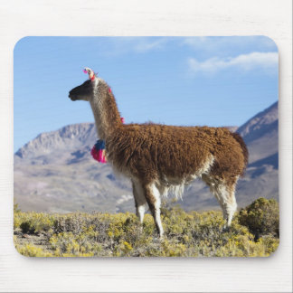 Decorated lama herd in the Puna, Andes mountains 2 Mouse Mat