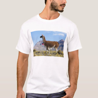 Decorated lama herd in the Puna, Andes mountains 2 T-Shirt