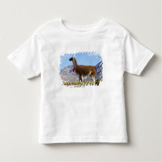 Decorated lama herd in the Puna, Andes mountains 2 Toddler T-Shirt