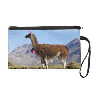 Decorated lama herd in the Puna, Andes mountains 2 Wristlet