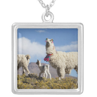 Decorated lama herd in the Puna, Andes mountains 3 Square Pendant Necklace