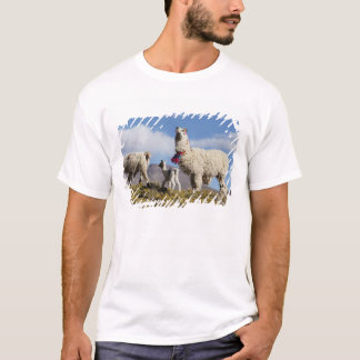 Decorated lama herd in the Puna, Andes mountains 3 T-Shirt