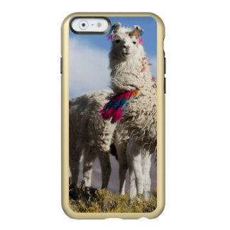 Decorated lama herd in the Puna, Andes mountains Incipio Feather® Shine iPhone 6 Case