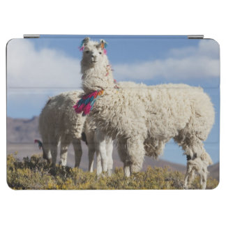 Decorated lama herd in the Puna, Andes mountains iPad Air Cover