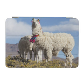 Decorated lama herd in the Puna, Andes mountains iPad Mini Cover