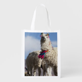 Decorated lama herd in the Puna, Andes mountains Reusable Grocery Bag