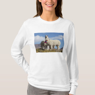 Decorated lama herd in the Puna, Andes mountains T-Shirt
