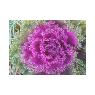 Decorative cabbage gallery wrapped canvas