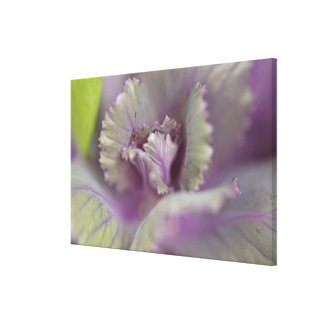 Decorative cabbage stretched canvas print