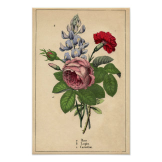 Decorator Botanical Print - Rose,Lupin & Carnation