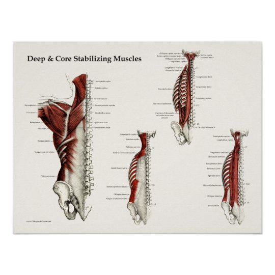 Deep & Core Stabilising Muscles Anatomy Poster