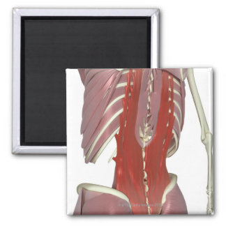 Deep Muscles of the Back Square Magnet