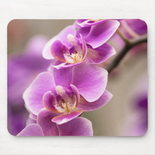 Deep Pink Phalaenopsis Orchid Flower Chain Mouse Mat