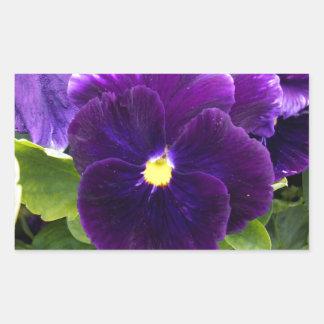 Deep Purple Pansies On Bush, Rectangular Sticker