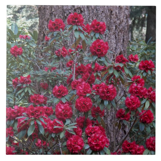 Deep Red Rhododendrons Floral Tile