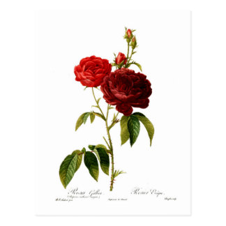 Deep red vintage roses painting postcard