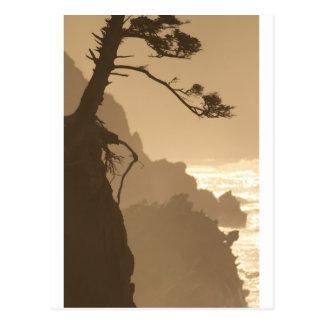 Deep Roots Post Card
