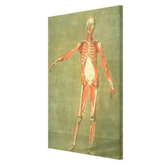 Deeper Muscular System of the Front of the Body, p Canvas Print