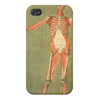 Deeper Muscular System of the Front of the Body, p iPhone 4 Covers