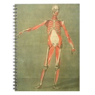 Deeper Muscular System of the Front of the Body, p Notebook
