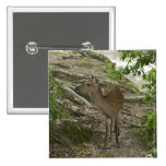 Deer 15 Cm Square Badge