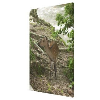 Deer 2 stretched canvas print