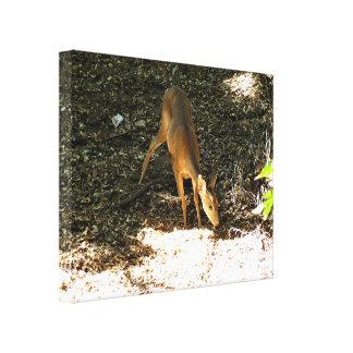 Deer 3 stretched canvas prints