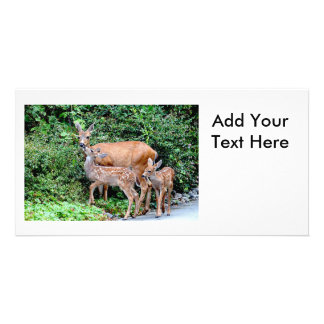 Deer and Twin Fawns Animal Family Customized Photo Card