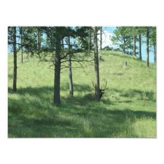 Deer Behind Tree Photo Art