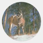Deer Buck Classic Round Sticker