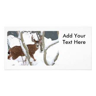 Deer Buck in Snow in Winter Customized Photo Card