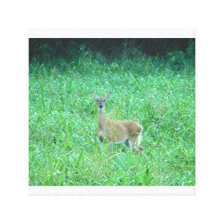 Deer canvas