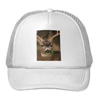 deer hats