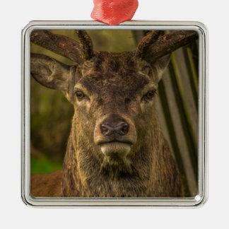 Deer Christmas Ornament