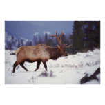 Deer Country Poster
