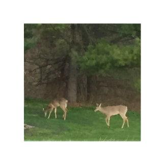 Deer Duo 4Julieanne Wood Prints