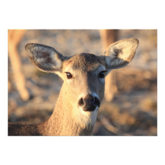 Deer Face Invitation Cards