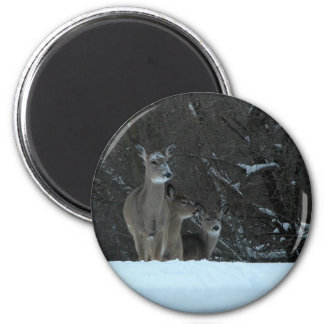 Deer Family 6 Cm Round Magnet