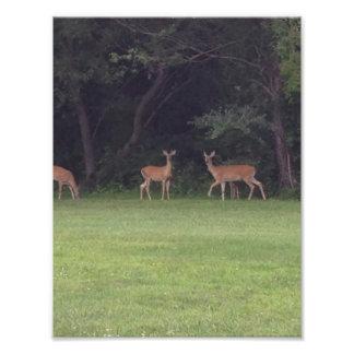 Deer Family Art Photo