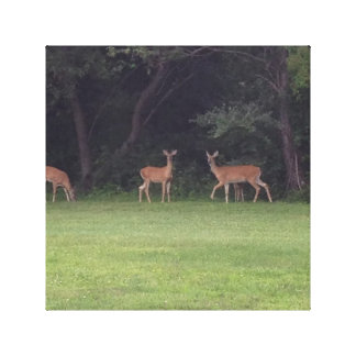 Deer Family Gallery Wrap Canvas