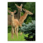 deer family portrait note card