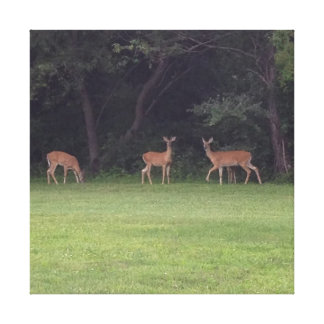 Deer Family Stretched Canvas Prints