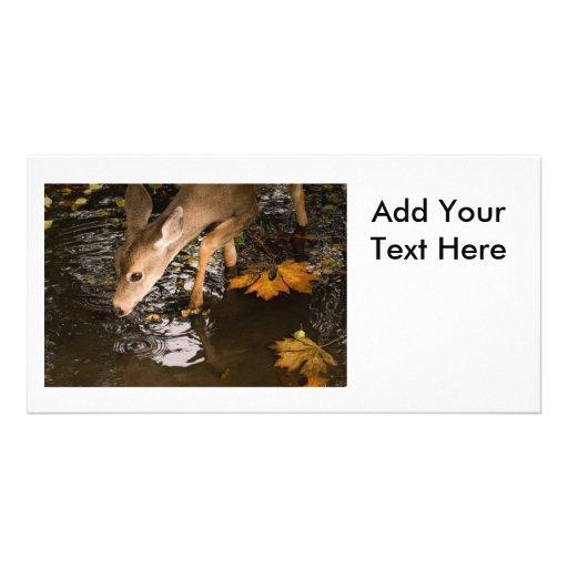Deer Fawn in a Creek Photo Greeting Card