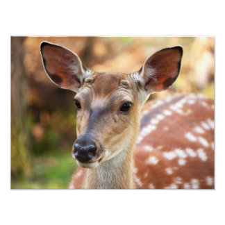 Deer Fawn Portrait Art Photo