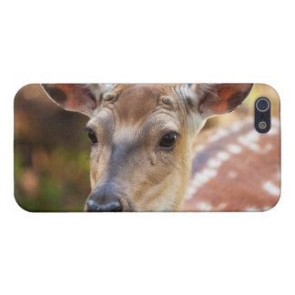 Deer Fawn Portrait iPhone 5 Covers