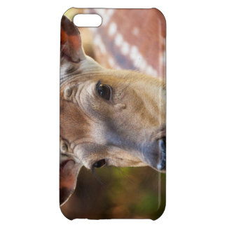 Deer Fawn Portrait iPhone 5C Covers