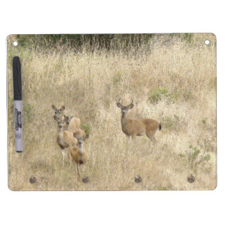 Deer Fawns Wildlife Animals Photography Dry-Erase Boards