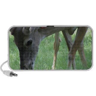 Deer Grazing Speakers